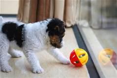puppy visit 2